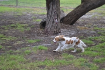 banksia-park-puppies-missy-18-of-40