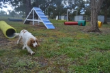 banksia-park-puppies-missy-19-of-40