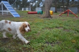 banksia-park-puppies-missy-20-of-40