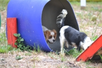 Banksia Park Puppies Muffy