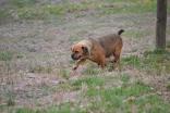 Banksia Park Puppies Oompa