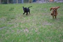Banksia Park Puppies Sage