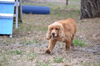 Banksia Park Puppies Sarina