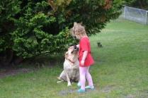 banksia-park-puppies-tim-tam-4-of-16