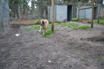 Banksia Park Puppies TimTam - 2 of 11