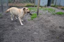 Banksia Park Puppies TimTam - 4 of 11