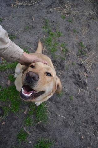 Banksia Park Puppies TimTam - 6 of 11