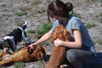 Banksia Park Puppies Willbee - 1 of 54 (45)