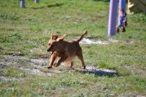 Banksia Park Puppies Willbee - 12 of 29