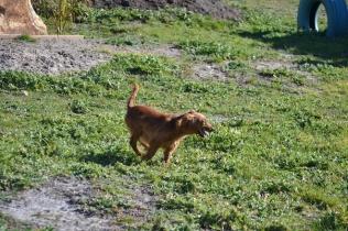 Banksia Park Puppies Willbee - 20 of 29