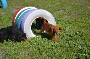 Banksia Park Puppies Willbee - 21 of 29