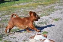 Banksia Park Puppies Willbee - 3 of 29