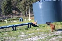 Banksia Park Puppies Willbee - 7 of 29