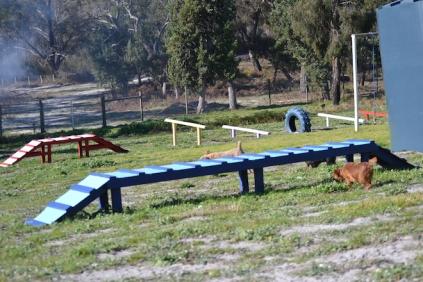 Banksia Park Puppies Willbee - 8 of 29