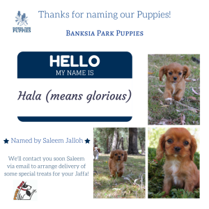 Banksia Park Puppies Competition