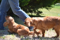 sage-banksia-park-puppies-6-of-13