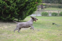 Banksia Park Puppies Cookie