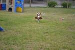 Banksia Park Puppies Noodle