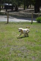 Banksia Park Puppies Opal