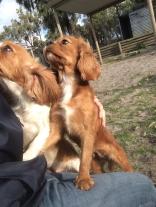 Banksia Park Puppies Peony