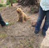 Banksia Park Puppies Kara