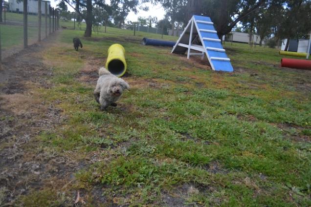 banksia-park-puppies-ariel-1-of-20