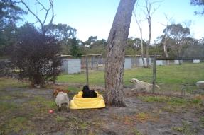 banksia-park-puppies-ariel-10-of-20