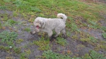 banksia-park-puppies-ariel-11-of-20