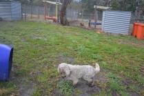 banksia-park-puppies-ariel-12-of-20