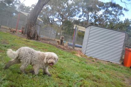 banksia-park-puppies-ariel-14-of-20