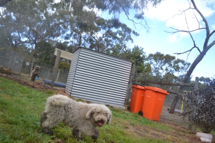 banksia-park-puppies-ariel-15-of-20