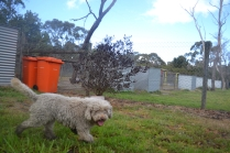 banksia-park-puppies-ariel-16-of-20