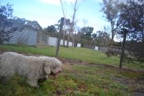 banksia-park-puppies-ariel-17-of-20