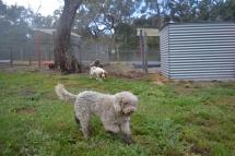 banksia-park-puppies-ariel-18-of-20