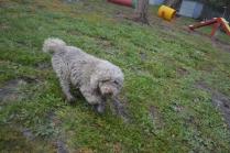 banksia-park-puppies-ariel-2-of-20