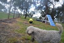 banksia-park-puppies-ariel-3-of-20