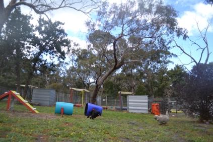 banksia-park-puppies-ariel-4-of-20