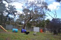 banksia-park-puppies-ariel-5-of-20