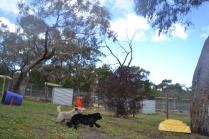 banksia-park-puppies-ariel-6-of-20