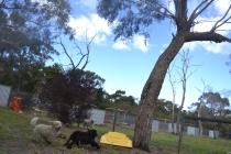 banksia-park-puppies-ariel-7-of-20