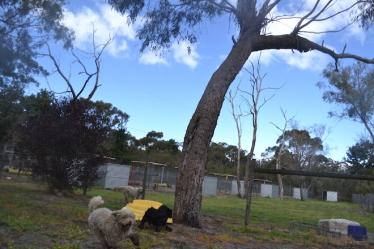 banksia-park-puppies-ariel-8-of-20