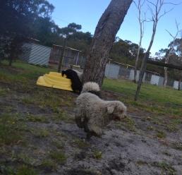 banksia-park-puppies-ariel-9-of-20