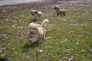 Banksia Park Puppies Ariel