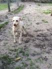 Banksia Park Puppies Briar
