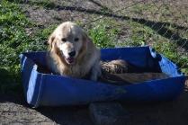 Banksia Park Puppies Elle 10