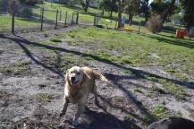 Banksia Park Puppies Elle