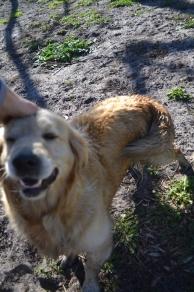 Banksia Park Puppies Elle 7