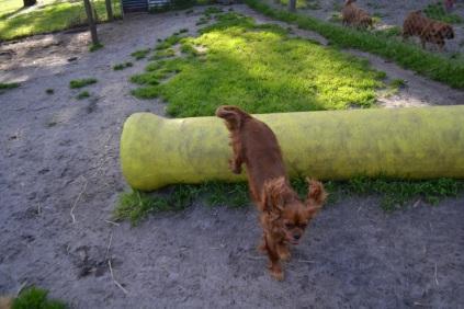 Banksia Park Puppies jumping Mami 3