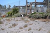 Banksia Park Puppies Poppy - 1 of 24 (13)