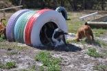 Banksia Park Puppies Poppy - 1 of 24 (22)